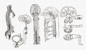 numbness tingling spinal cord dysfunction